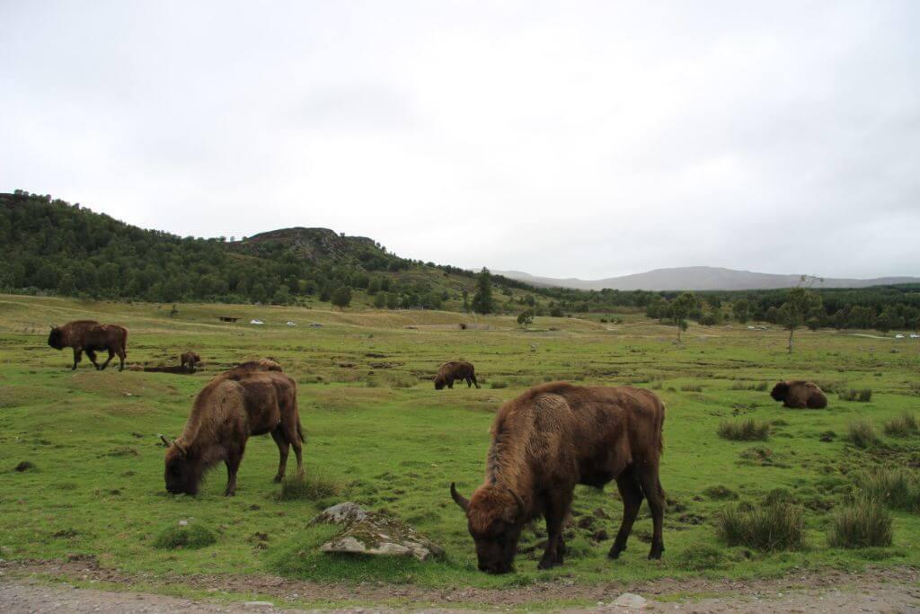 סקוטלנד ספארי אבימור תכנון טיול