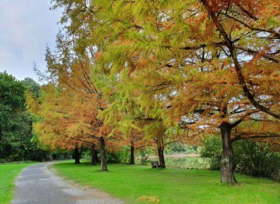 Rennes פארק חבלים שלכת בריטני צרפת
